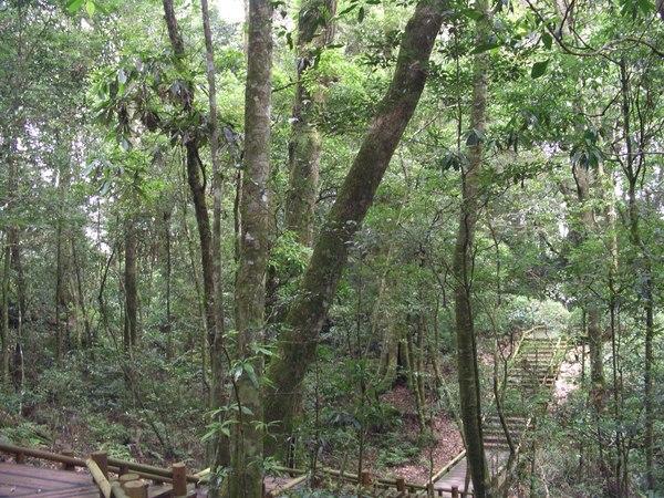 管理處附近目前只有開放的森林步道