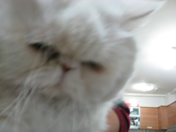 霸主家的貓