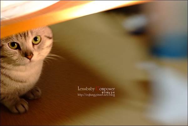lensbabyc15.jpg