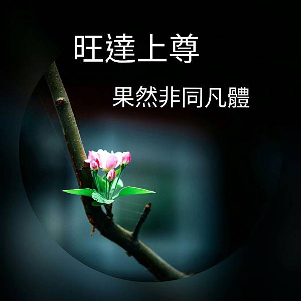 InFrame_1552638364417.jpg
