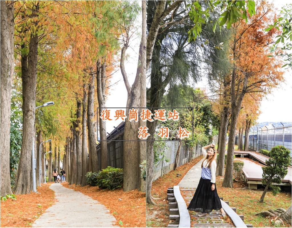 復興崗捷運站落羽松首圖3.jpg