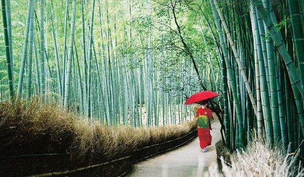 京都 竹林步道