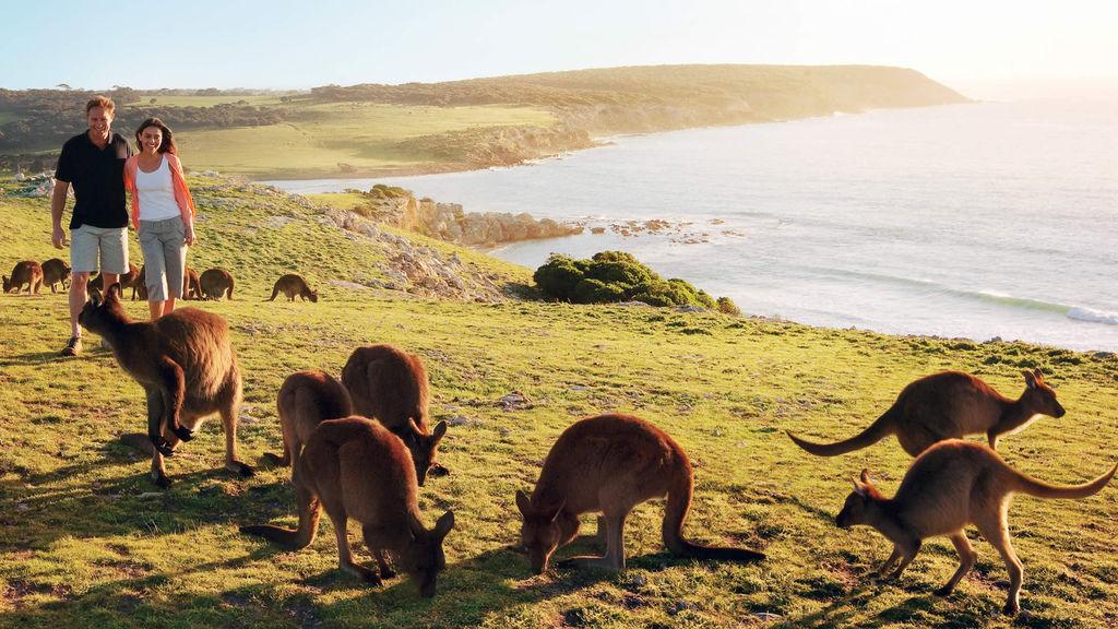 9. 澳洲袋鼠島(Kangaroo Island, Australia).jpg