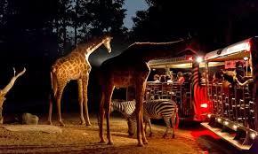 動物園遊園車.jpg