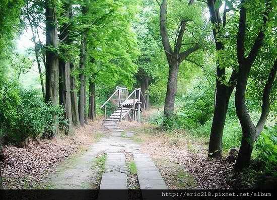 肖甸湖森林公園2