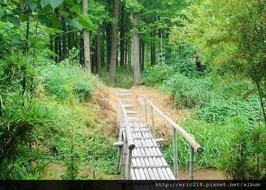 肖甸湖森林公園