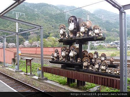 TOROKO龜岡駅的貍貓
