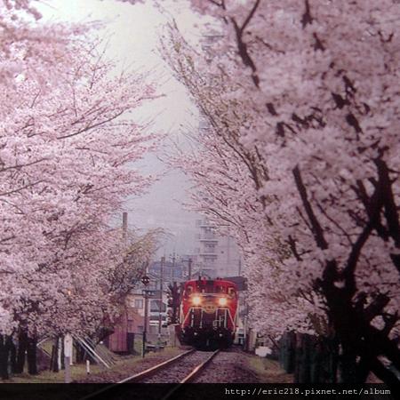 嵯峨野春景-2