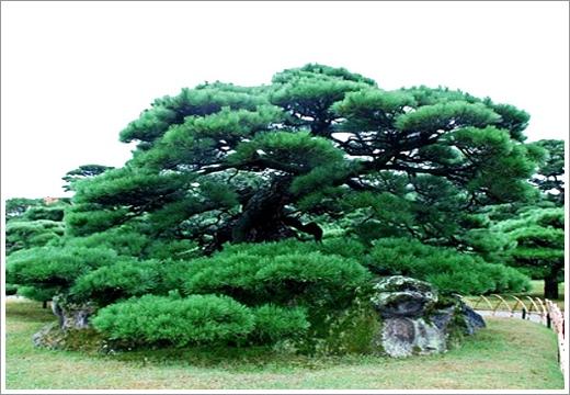 第4景-鶴龜松