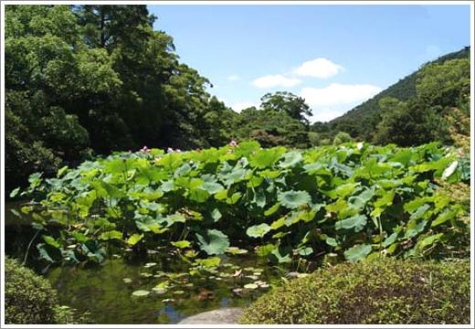 第27景-芙蓉沼