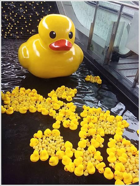 中央公園黃色小鴨-4.jpg
