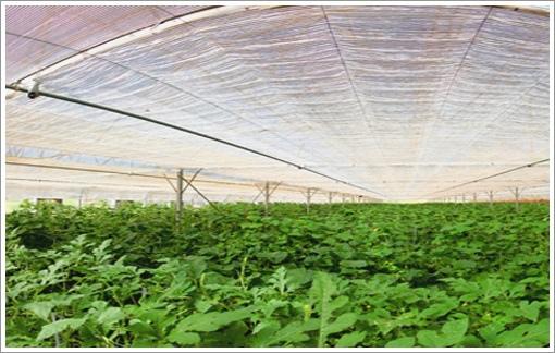 現代體驗農場