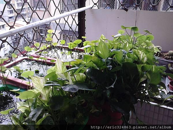 園藝用長型盆 - 001.jpg