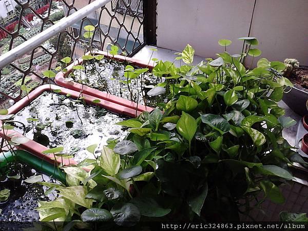 園藝用長型盆 - 003.jpg