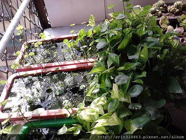 園藝用長型盆 - 004.jpg