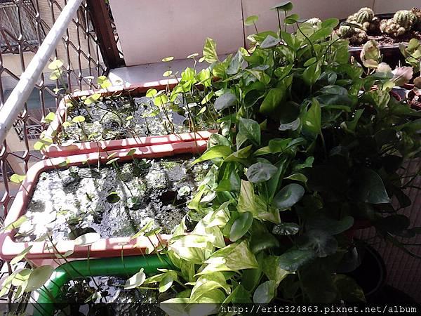 園藝用長型盆 - 005.jpg
