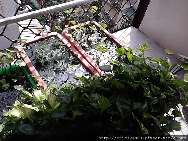 園藝用長型盆 - 006.jpg