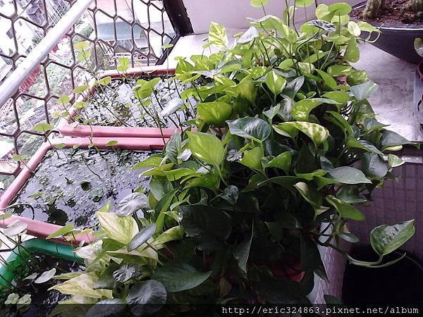 園藝用長型盆 - 008.jpg