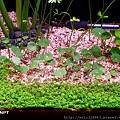香菇草 - 左 - F2.9 - 1/20 - 100自動 - 001 ★ 加字