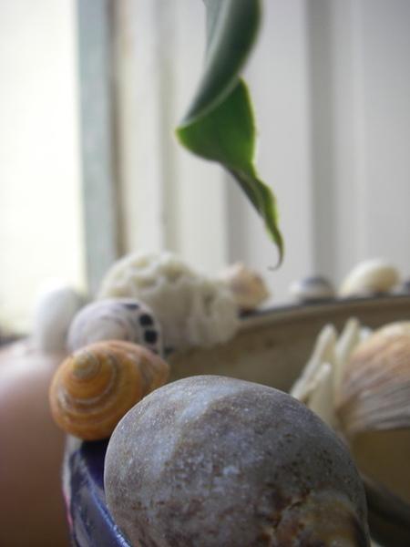 澎湖鳥嶼的第一天-下午行程-小花私人收藏貝殼館03