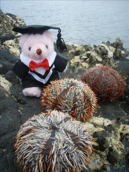 澎湖鳥嶼的第二天-下午行程-浮潛08