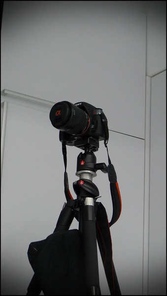 P1090558.JPG