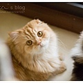 DSC_0020_1a copy.jpg