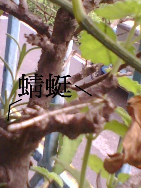 2010-6-15蜻蜓-1修改.jpg