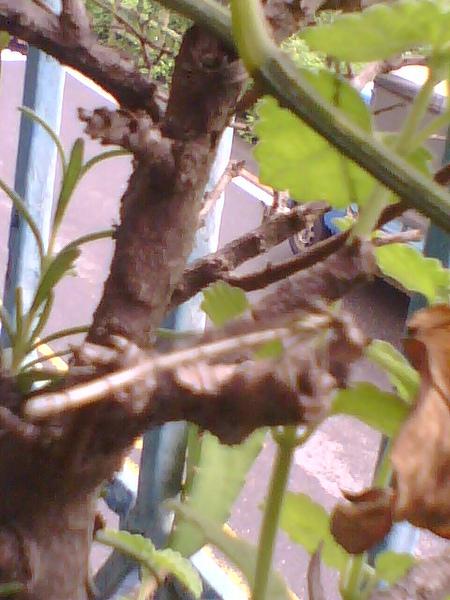 2010-6-15蜻蜓-1.jpg