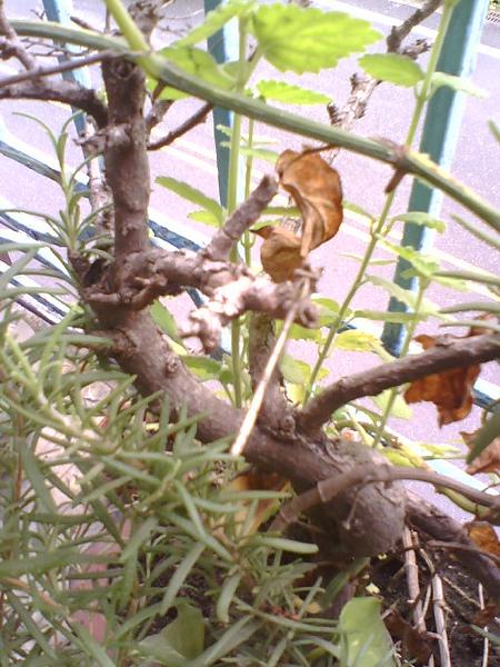 2010-6-15蜻蜓-2.jpg