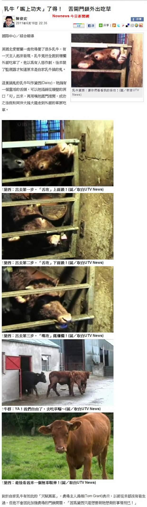 乳牛「嘴上功夫」了得! 舌開門鎖外出吃草-2011.06.18-2.jpg