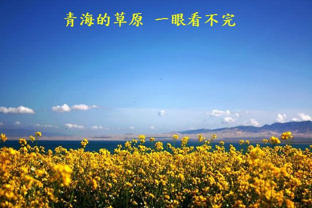 青海的草原一眼看不完-02.jpg