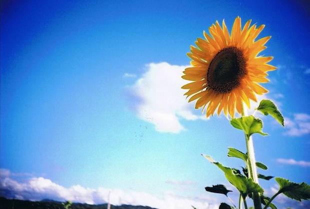 太陽花-01.jpg