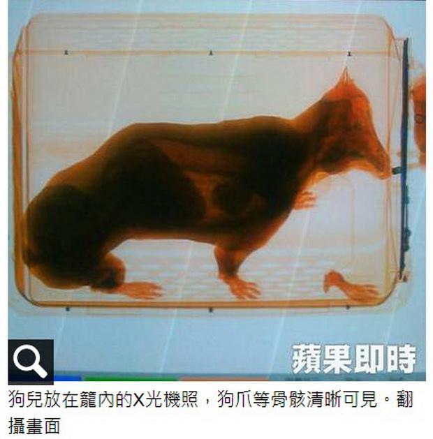 黑貓看成鴨賞 航警扯非關維安不認錯-2014.05.26-03.jpg