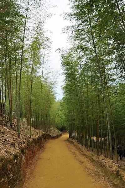 天梯竹林步道