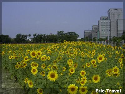 2010-遇見向日.jpg.jpg