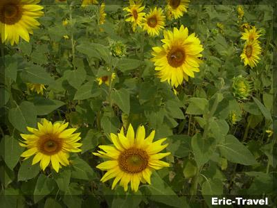 2010-遇見向日2.jpg.jpg