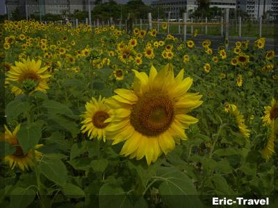 2010-遇見向日3.jpg.jpg