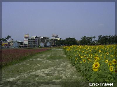 2010-遇見向日4.jpg.jpg