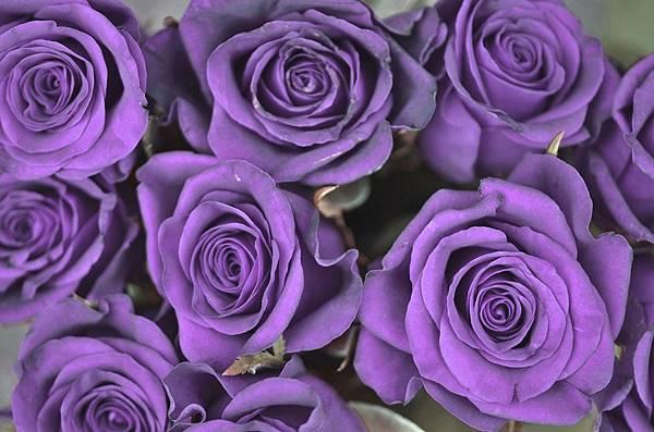 rose-821186_960_720.jpg