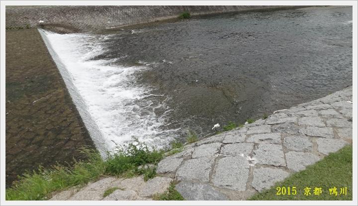 京都鴨川003.JPG