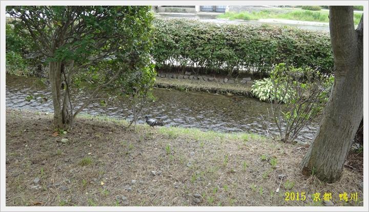 京都鴨川031.JPG