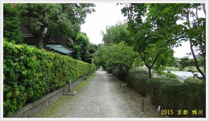 京都鴨川030.JPG