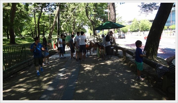 20150714奈良公園021.JPG