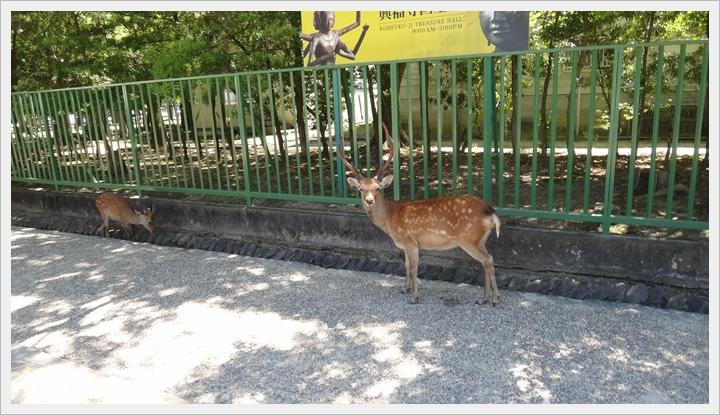 20150714奈良公園022.JPG