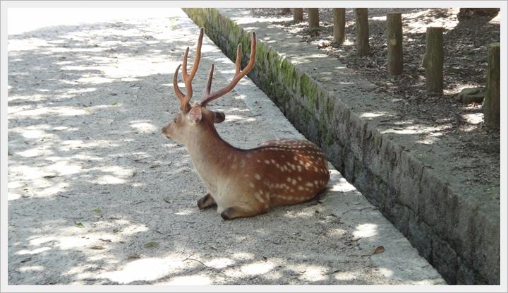 20150714奈良公園033.JPG