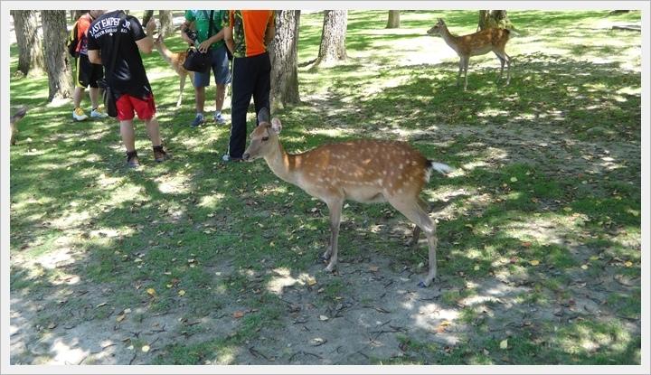 20150714奈良公園038.JPG