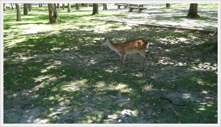 20150714奈良公園039.JPG