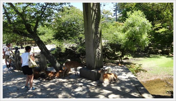 20150714奈良公園044.JPG