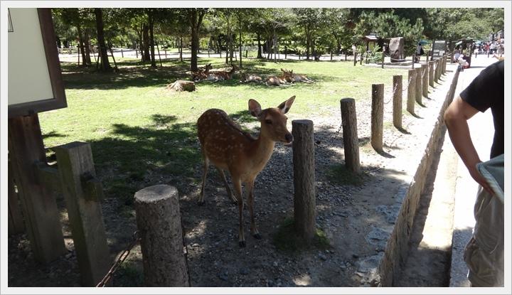 20150714奈良公園047.JPG